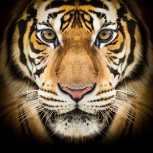 Detroit Tiger of a Deal